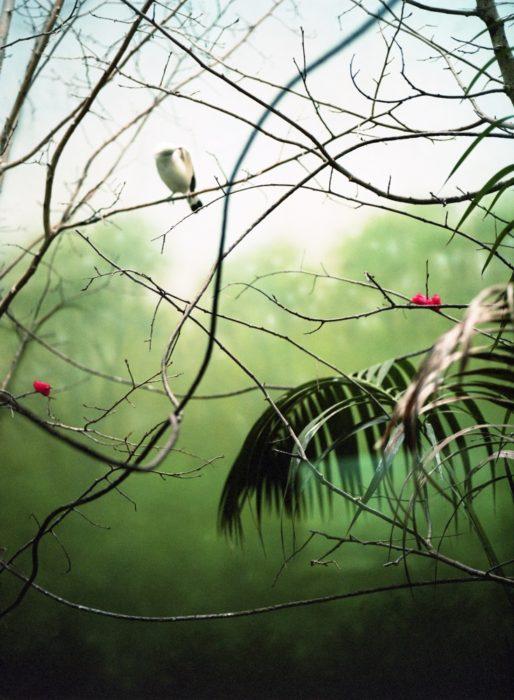 Between The Bridges - Paradise Bird