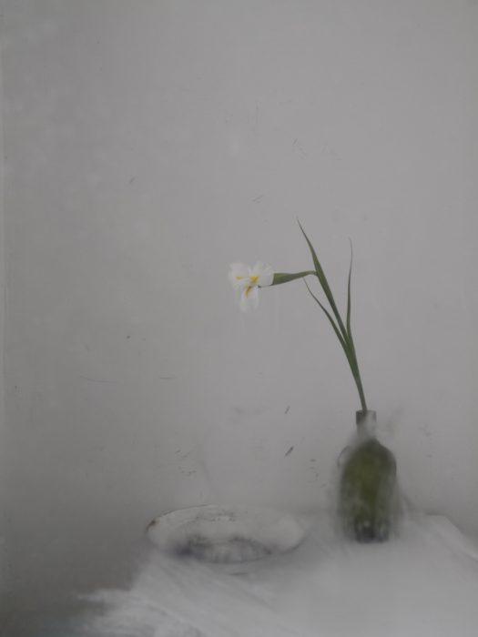 Weisse Iris
