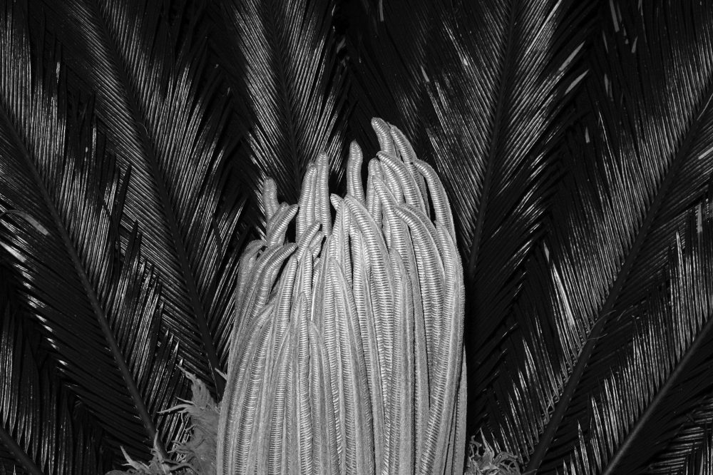 Untilted ( Palm  , 2012 )